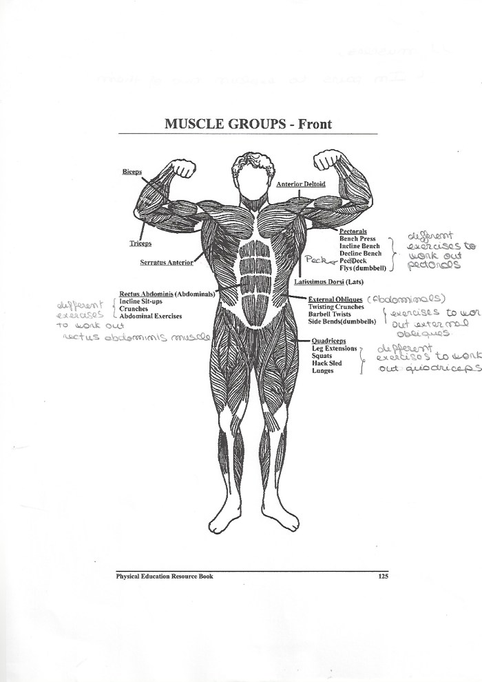muscle-groups-front